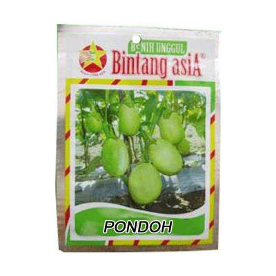 Bibit Terong Pondoh (Regular)